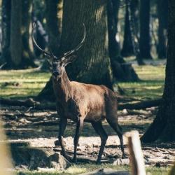 Lesnické pletivo BENITA poplastované, výška 160 cm, 13 drátů