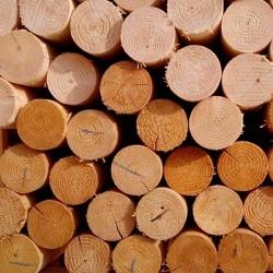 Dřevěný kůl, výška 250 cm, průměr 8 cm, s hrotem